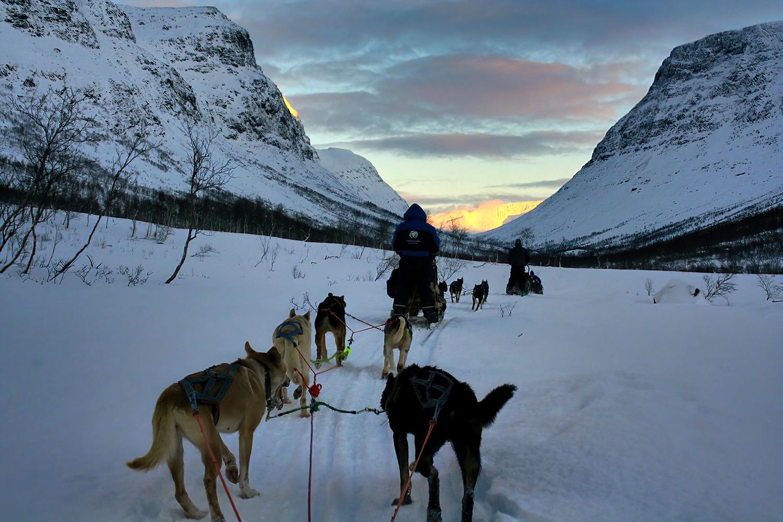 Chiens de traineau en Norvège du Nord