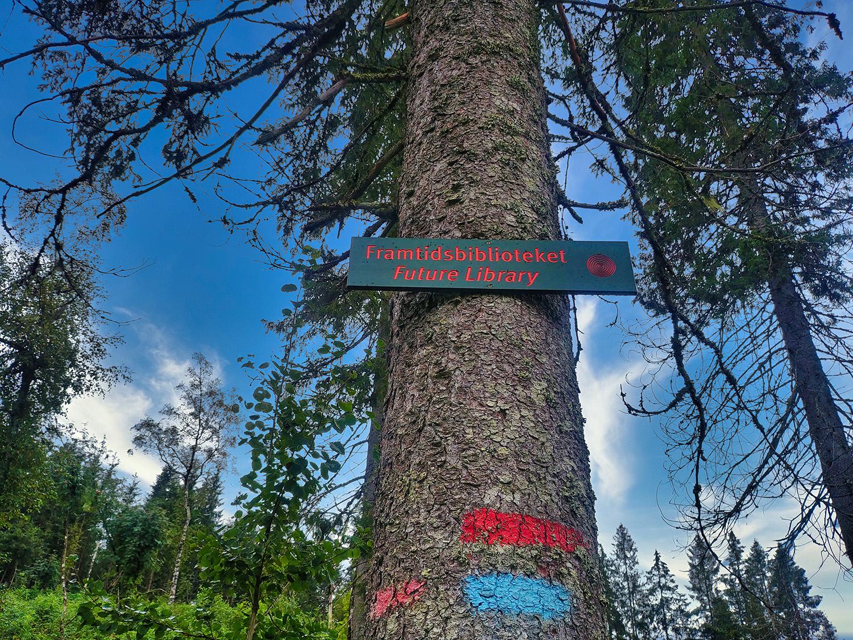 Randonnée à Oslo au cœur des arbres plantés pour Future Library